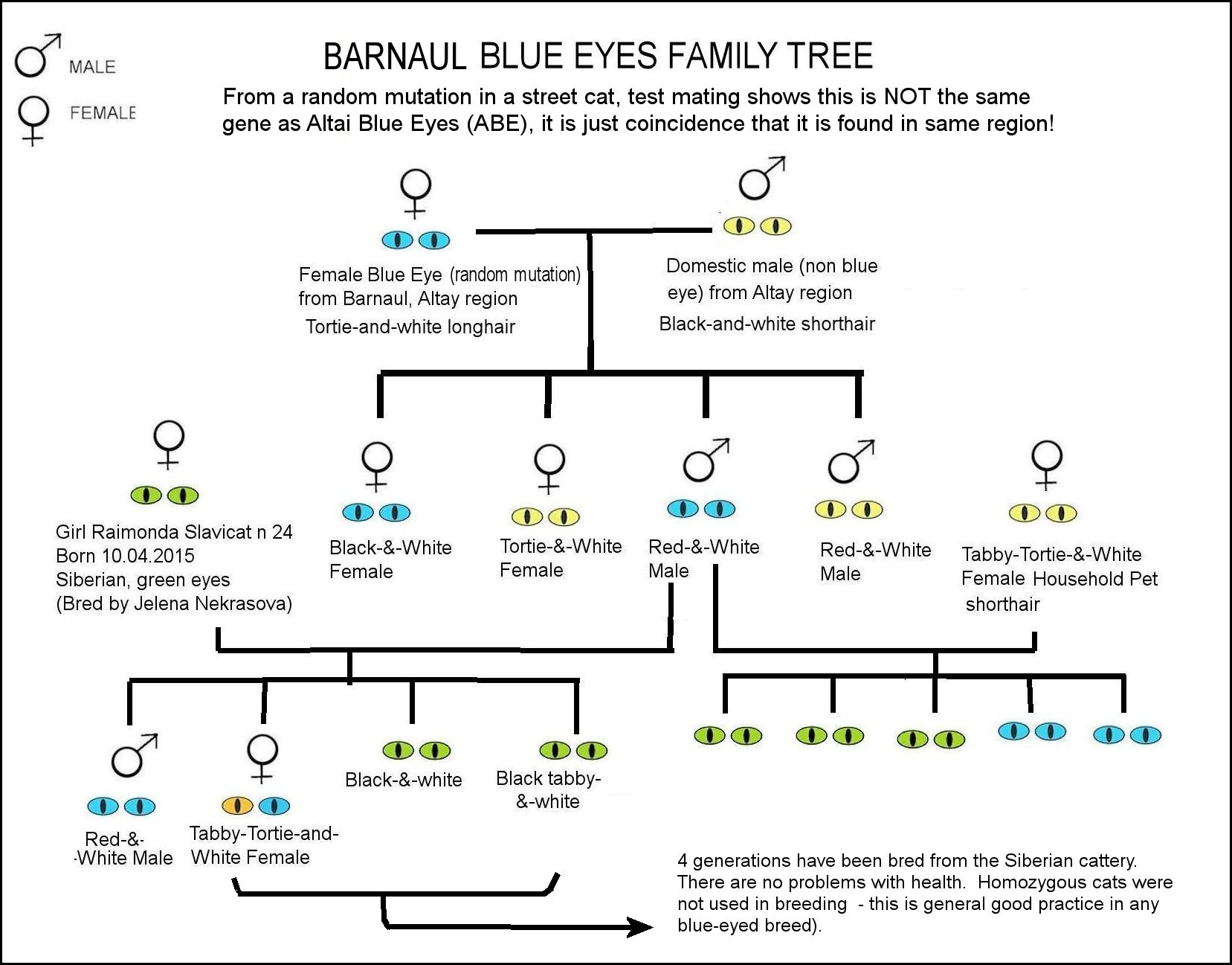 Eye Color Family Pedigree Example