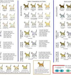 cat colours diagram chart [ 3608 x 2605 Pixel ]