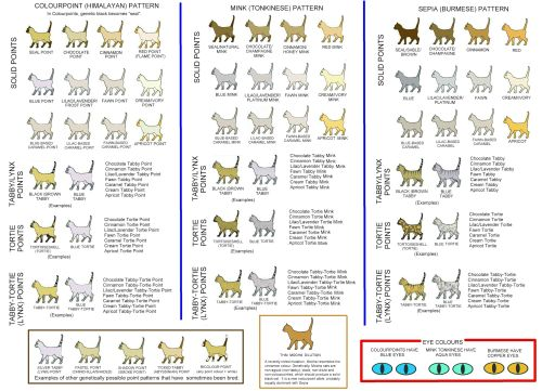 small resolution of cat colours diagram chart
