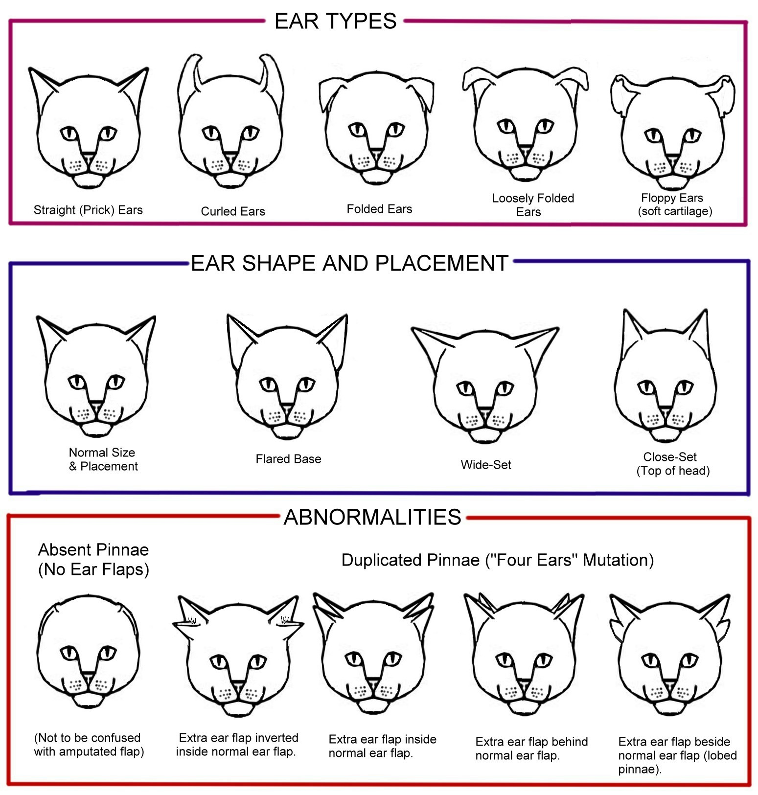 hight resolution of cat conformation diagram chart 3 tails