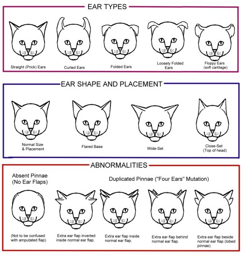 small resolution of cat conformation diagram chart 3 tails