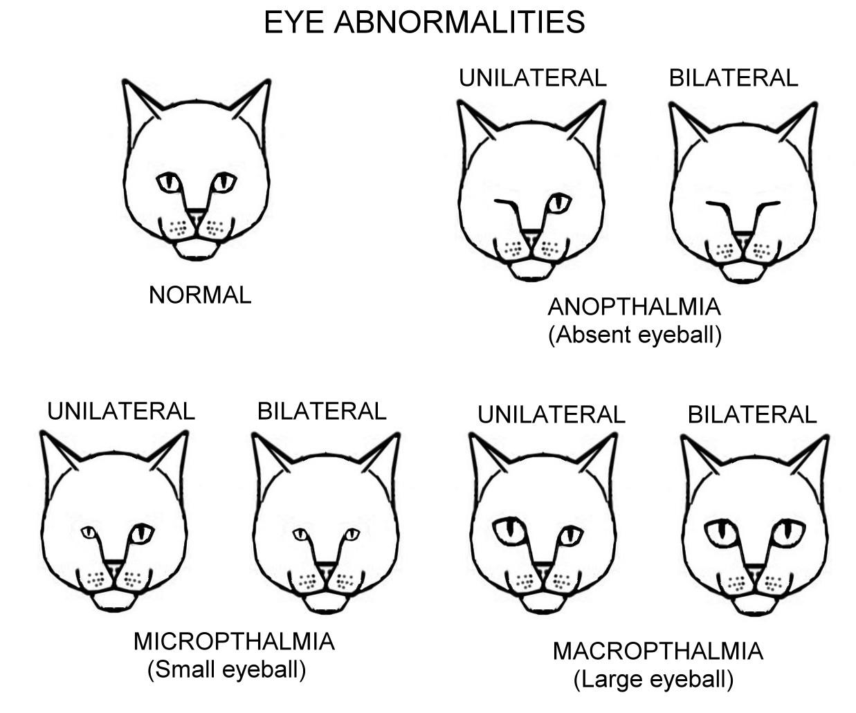 1000+ images about Feline Anatomy on Pinterest
