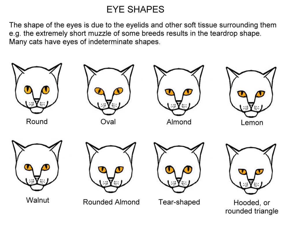 medium resolution of in addition to the different colours there are several distinct eye shapes these are shown in slightly exaggerated form in the chart below