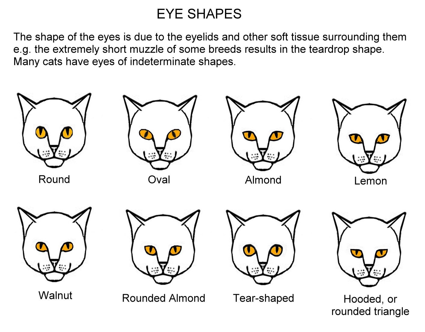 hight resolution of in addition to the different colours there are several distinct eye shapes these are shown in slightly exaggerated form in the chart below