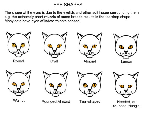 small resolution of in addition to the different colours there are several distinct eye shapes these are shown in slightly exaggerated form in the chart below