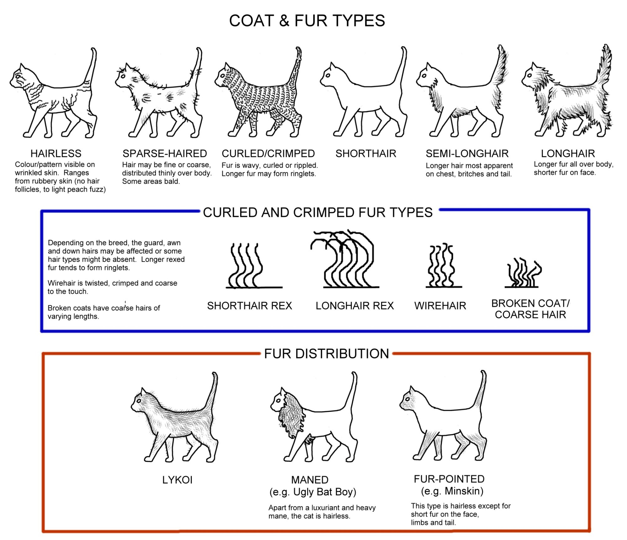 hight resolution of cat conformation diagram chart