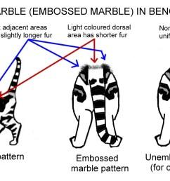 cat conformation diagram chart [ 1592 x 929 Pixel ]