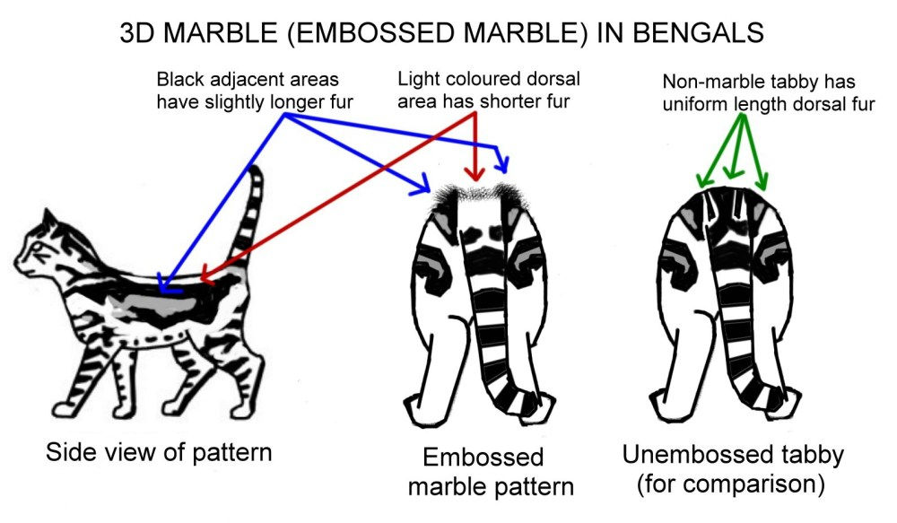 medium resolution of cat conformation diagram chart