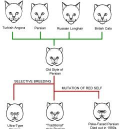 cat conformation diagram chart [ 1441 x 1665 Pixel ]