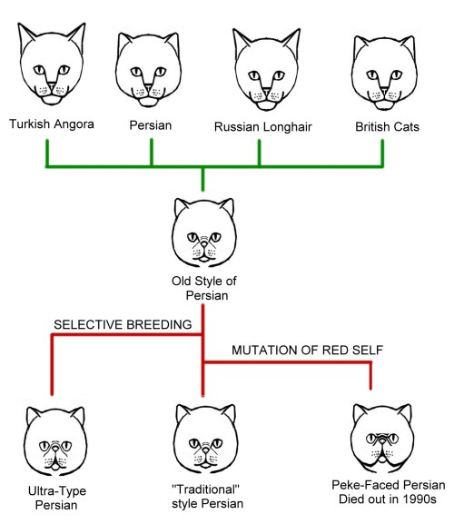 small resolution of cat conformation diagram chart