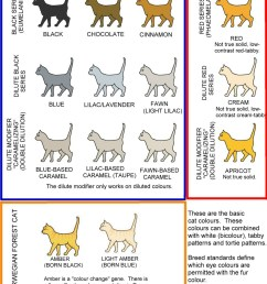 cat colours diagram chart [ 1119 x 1339 Pixel ]