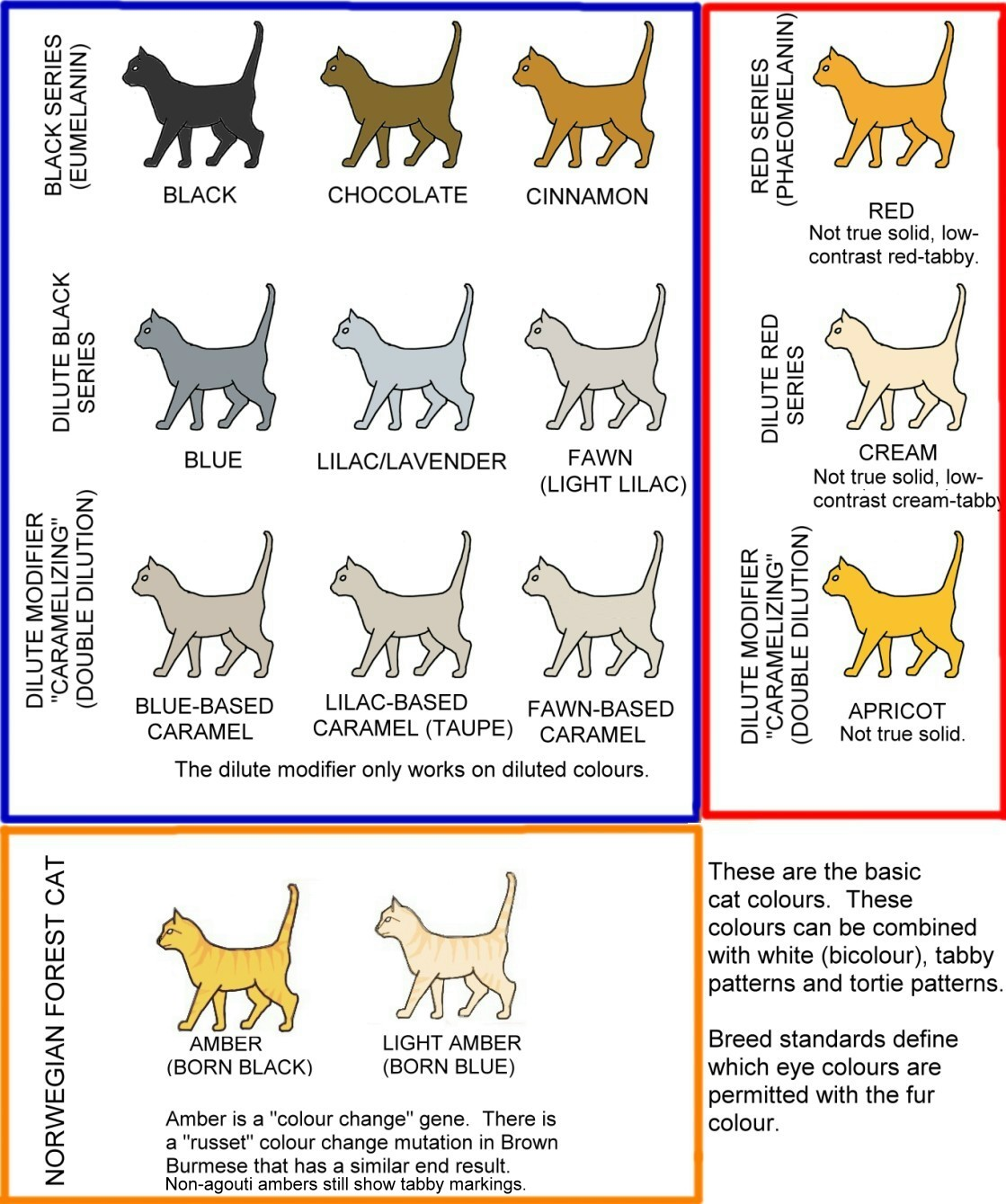 hight resolution of cat colours diagram chart