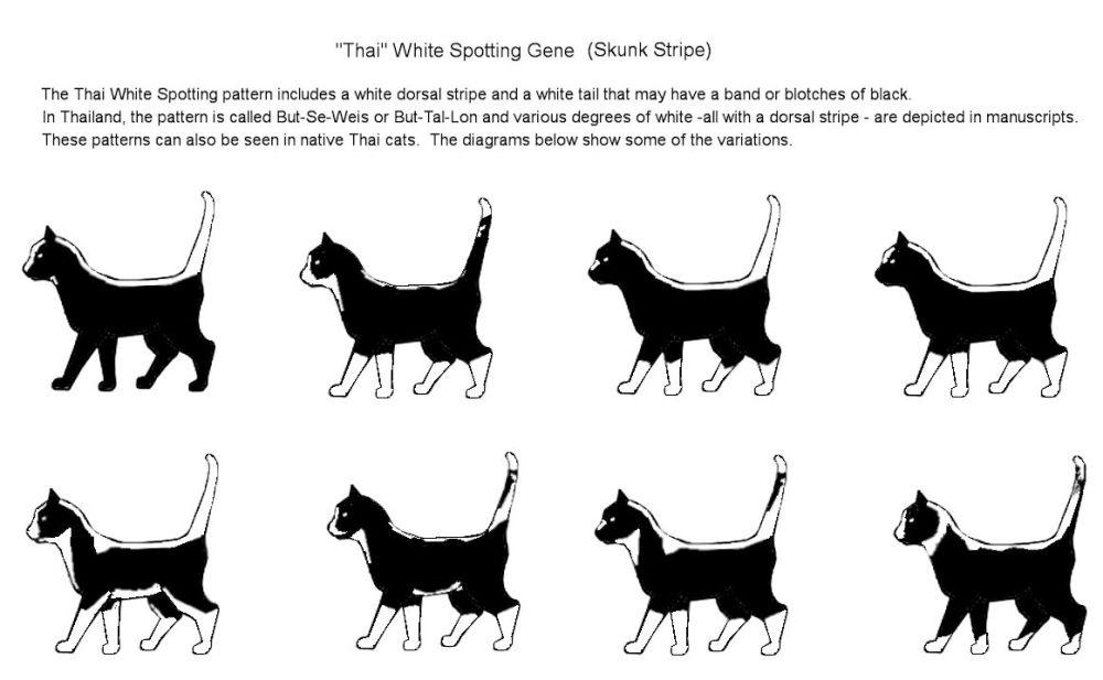 medium resolution of cat colours diagram chart