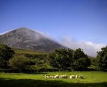 mountain, sheep