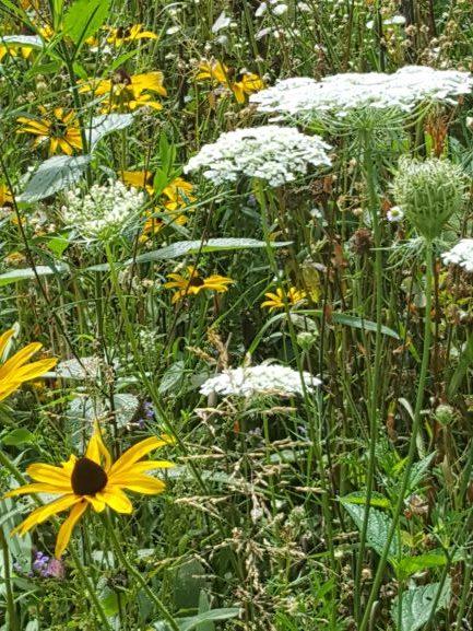 flowers-yellow-white-green-grass