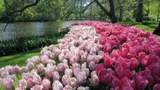 Visiter Keukenhof - Le parc des bulbes de tulipes