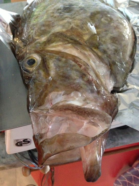 Fishy at sea