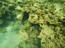 snorkeling-aqaba-mer-rouge-11