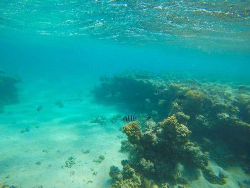 snorkeling-aqaba-mer-rouge-9