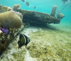 snorkelin isla cozumel
