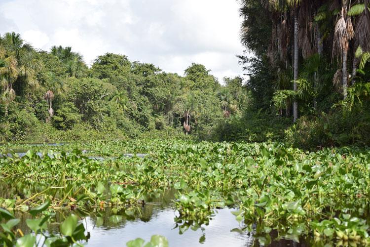 orenoque-vegetation