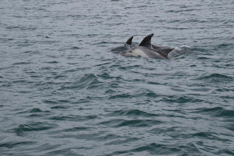dauphin-bay-of-islands