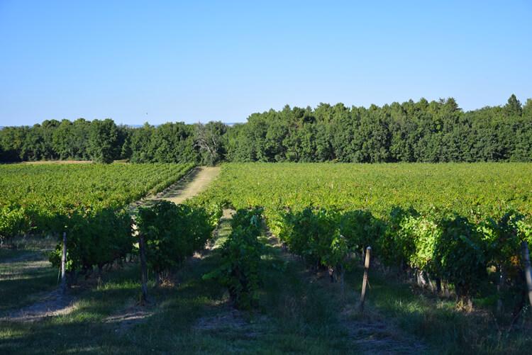 Vignes Saint-Guilhem