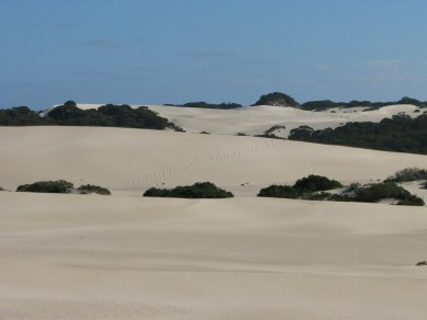 Kangaroo island - Little Sahara