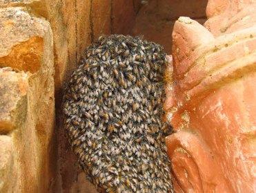 Bagan - Sur le chemin des temples, essaim d'abeilles