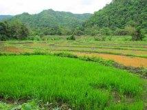 Chiang Mai environs - Rando dans la jungle., les rizières