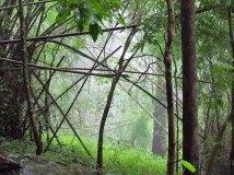 Chiang Mai environs - Rando dans la jungle