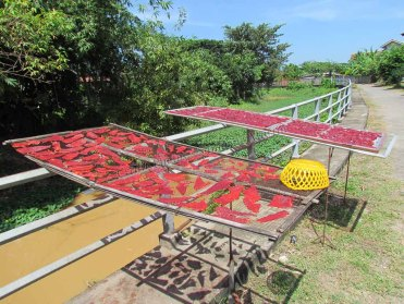 Phayao - Village 'Ban Mae Tam' - Au hasard des rues, séchage de jambons