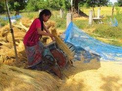 4000 îles - Don Khon - Récupération du riz