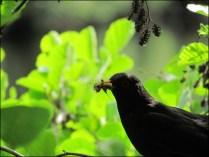 Berlin - Grand jardin aux animaux 'großer Tiergarten', oiseaux