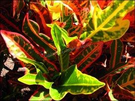 Darwin - Jardin botanique - Faune et flore
