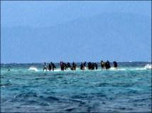 La grande barrière de Corail - Snorkeling, dune de sable en plein milieu de l'océan