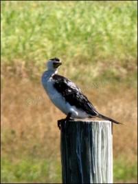 Makay - Jardin botanique, oiseau
