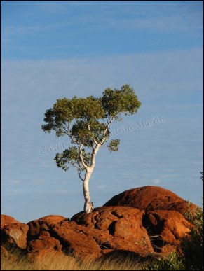 Sur la route entre Darwin et Alice Spring - Devil's marbel