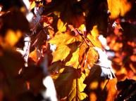 Fredericton - Sentier, feuilles et fleurs