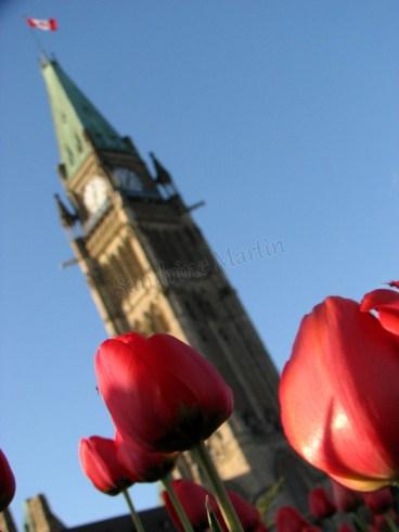 Ottawa - Le parlement, le clocher