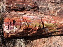 Arizona - Parc national Petrified Forest - Long logs trail