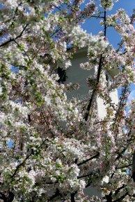 Californie - Napa - Robert Mondavy Winery, fleurs