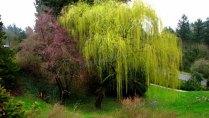 Oregon - Portland - Around Downtown - Washington Park - Rose garden