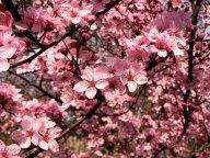 Washington - Seattle - Bainbridge - Fleurs