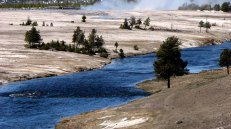 Wyoming - Yellowstone - Sur la route entre Madison et Old Faithful