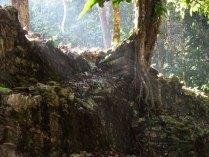 Chiapas - Site de Palenque