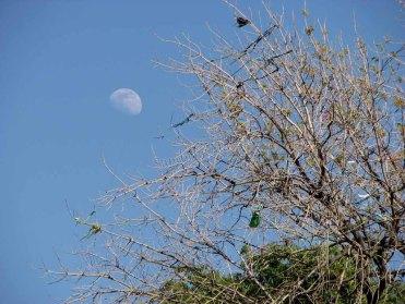 Puebla - Cholula, la lune