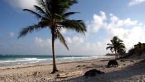 Quintana Roo - Tulum - Réserve de la biosphere Sian Ka An, plage