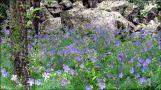 Orkhon Valley, fleurs