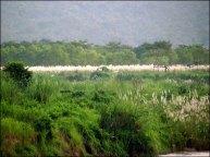 Parc national de Chitwan - Rivière 'Narayani-Rapti'